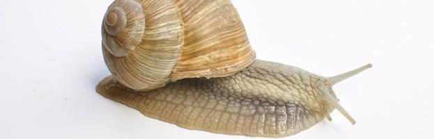 Snail Anatomy