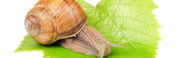 Facts about Snails