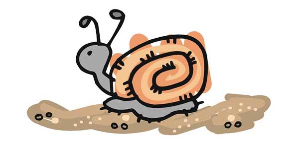 snail munching