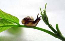 snail on a stalk