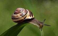 snail sliding