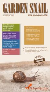 Garden snail infographic