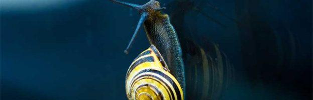 Snail Evolution