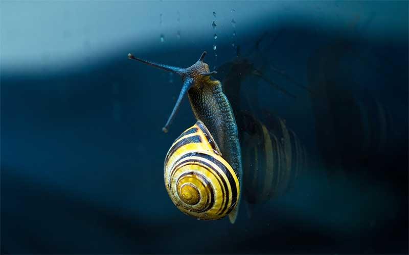 Snail ancestors.