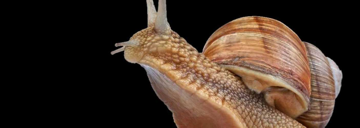 snail_facts1