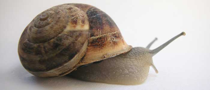 snail_facts3_700
